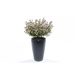 Parrot Pot smart blomsterpotte